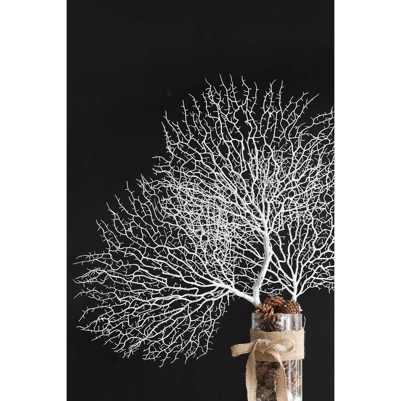 ענף לבן S