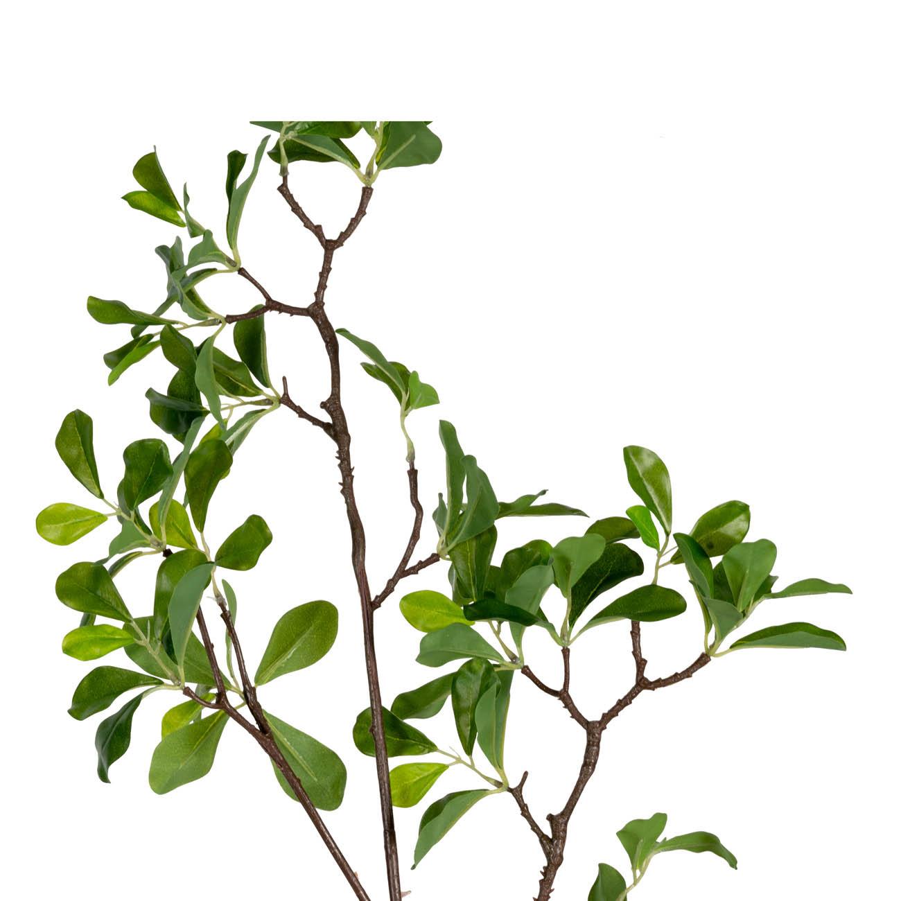ענף ירוק